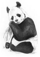 Rysowanka A5 z ołówkami - Panda