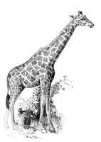 Rysowanka A5 z ołówkami - Żyrafa