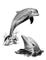 Rysowanka A4 z ołówkami - Delfiny