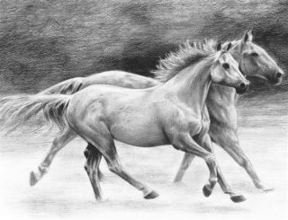Rysowanka A4 z ołówkami - Konie